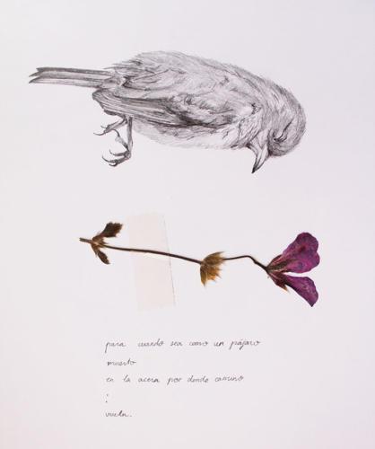Serie Pájaros 10